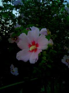 花の香りに誘われて立ち止まってしまった私。そして、人違いな出来事。