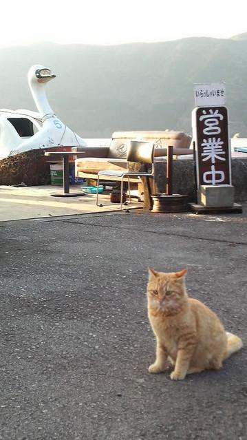 思い立って、箱根にドライブに行ってみた。
